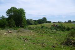 Abattage-des-arbres-sur-le-site-du-chantier