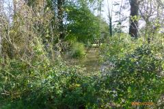 W20141108_Moulin de Grisendhal jardin 1350